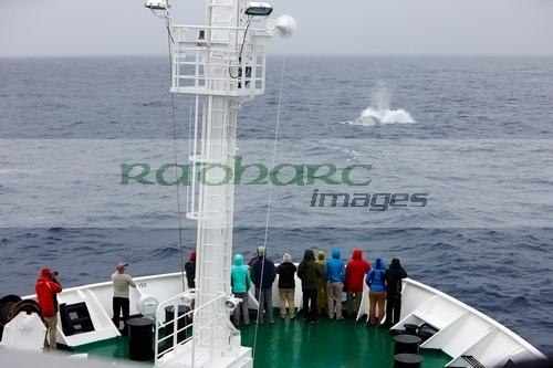 Chasing blue whales in the Drake Passage