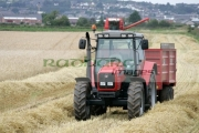 Massey-Ferguson-red-tractor-trailer-in-wheat-field-outside-newtownards,-county-down,-northern-ireland