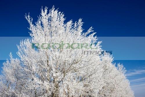 hoar frost saskatchewan