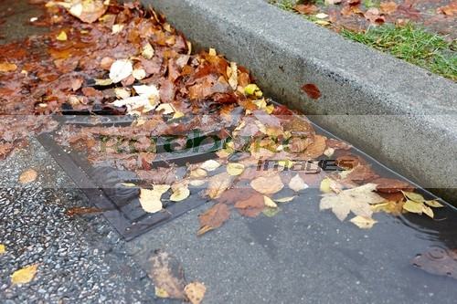 wet leaves in the drain