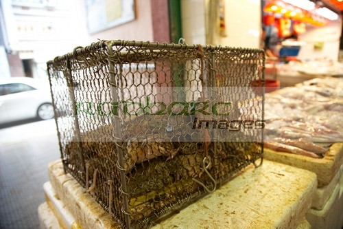 Live frogs for sale at Hong Kong food market