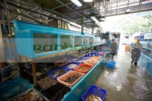 Hong Kong Aberdeen seafood market