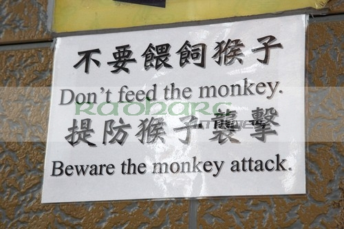Beware the monkey attack sign