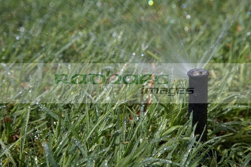 garden grass water sprinkler spraying water over grass