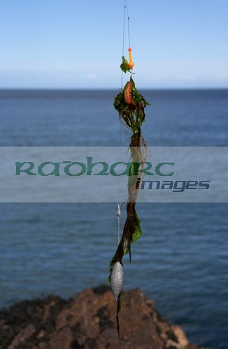 seaweed and ragworm