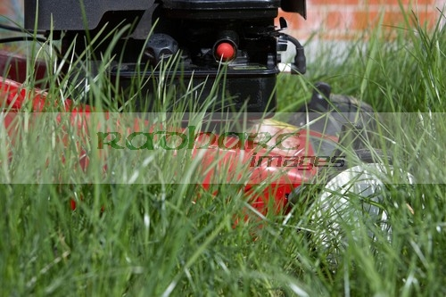 petrol lawnmower in long grass