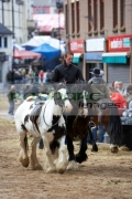man-riding-horses-on-display-at-the-ballyclare-may-fair-county-antrim-northern-ireland
