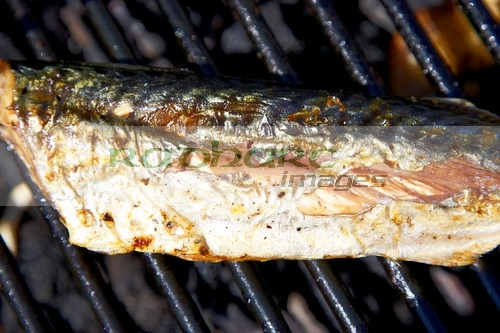 fresh mackerel fish on the bbq