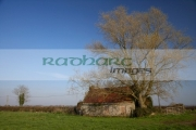 old-bricked-up-red-lead-tin-roofed-old-irish-farmers-rural-cottage-overgrown-by-huge-tree-in-farmland-county-armagh-northern-ireland-uk