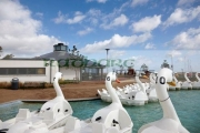 swans-in-the-pickie-fun-park-in-bangor-county-down-northern-ireland