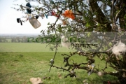 offerings-attached-to-fairy-thorn-tree-on-the-hill-tara-in-county-meath-republic-ireland