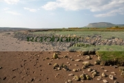 shoreline-with-footprints-in-the-mud-flats-old-coastal-wall-county-sligo-republic-ireland