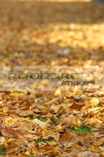 autumn in ireland - autumn fallen leaves