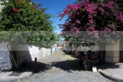 trees-growing-either-side-old-portuguese-street-with-central-drain-from-spanish-street-with-high-kerbstones-drain-in-Barrio-Historico-Colonia-Del-Sacramento-Uruguay-South-America
