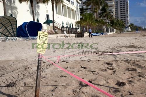 Sea Turtle nest on Florida seafront