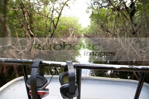 Mangrove jungle florida everglades